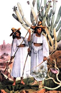 Tohono O'odham Women Picking Fruit