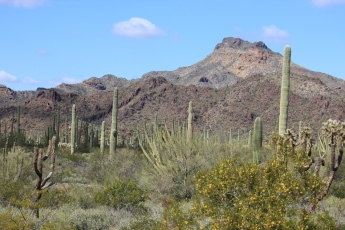 Organ Pipe Cactus National Monument: Is it Really America's