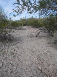 3295 migrant trail 1 13.12.16