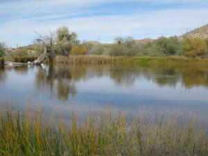 3310 Qbq pond from SE 13.12.16