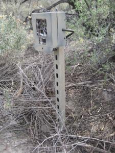 3328 wildlife camera 13.12.16